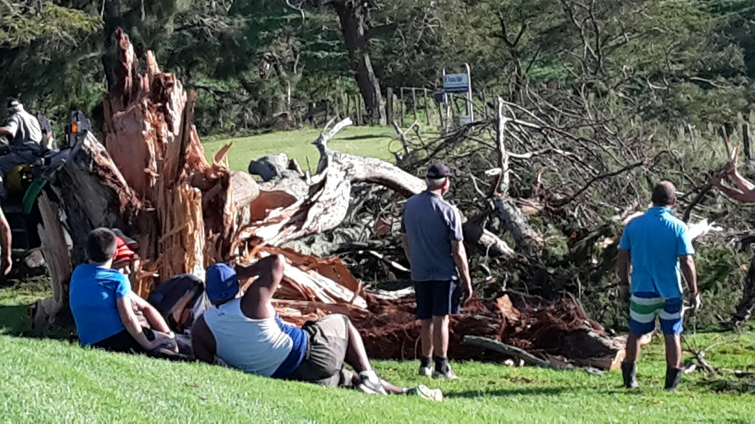 Cyclone Cook - macrocarpa at 13th Tee